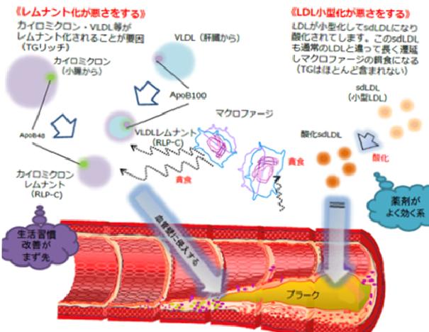 リパーゼ リポ タンパク質